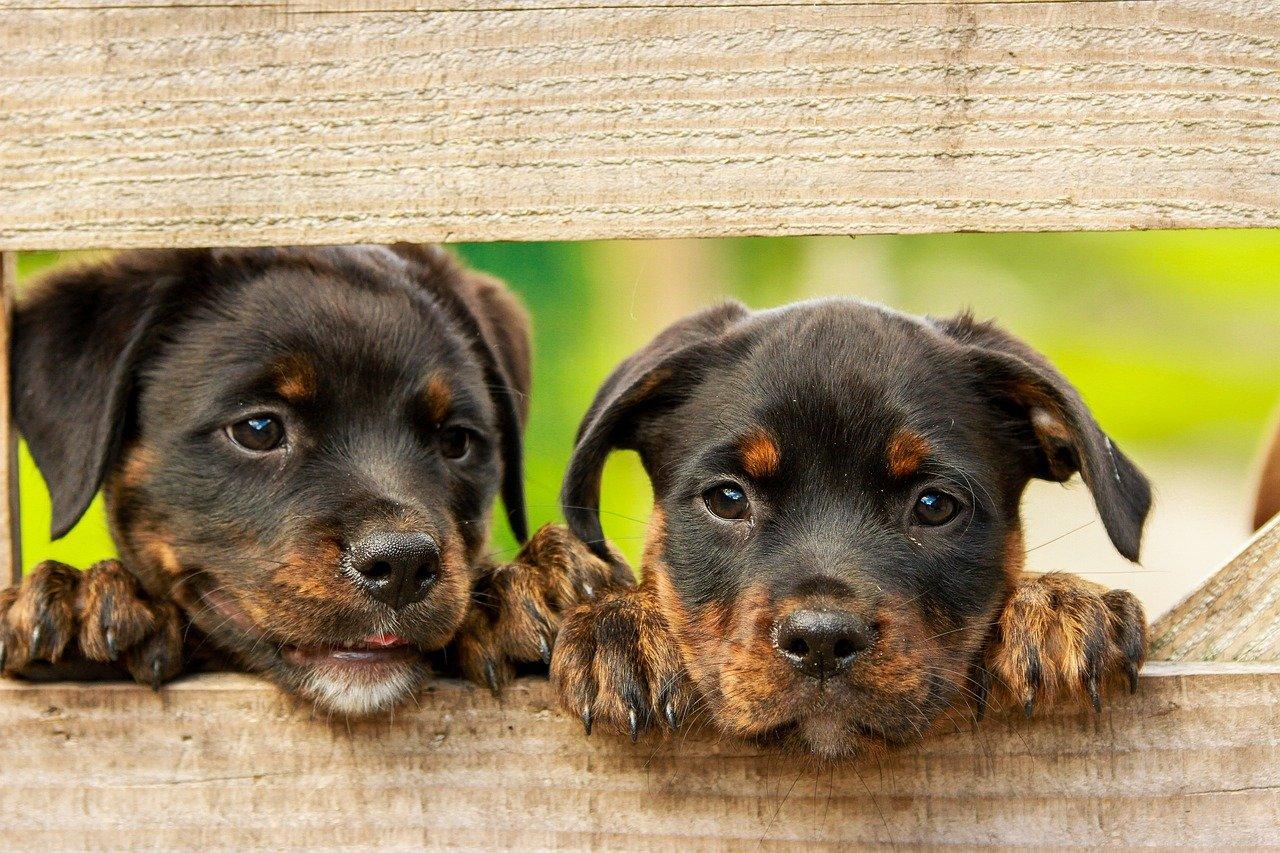 odrobaczanie psów
