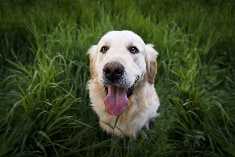 Skuteczne środki na pchły u psa
